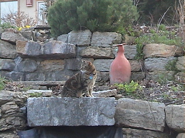 Cat on water fountain