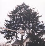 Coplient Painting TREE TRIMING & REMOVAL Example