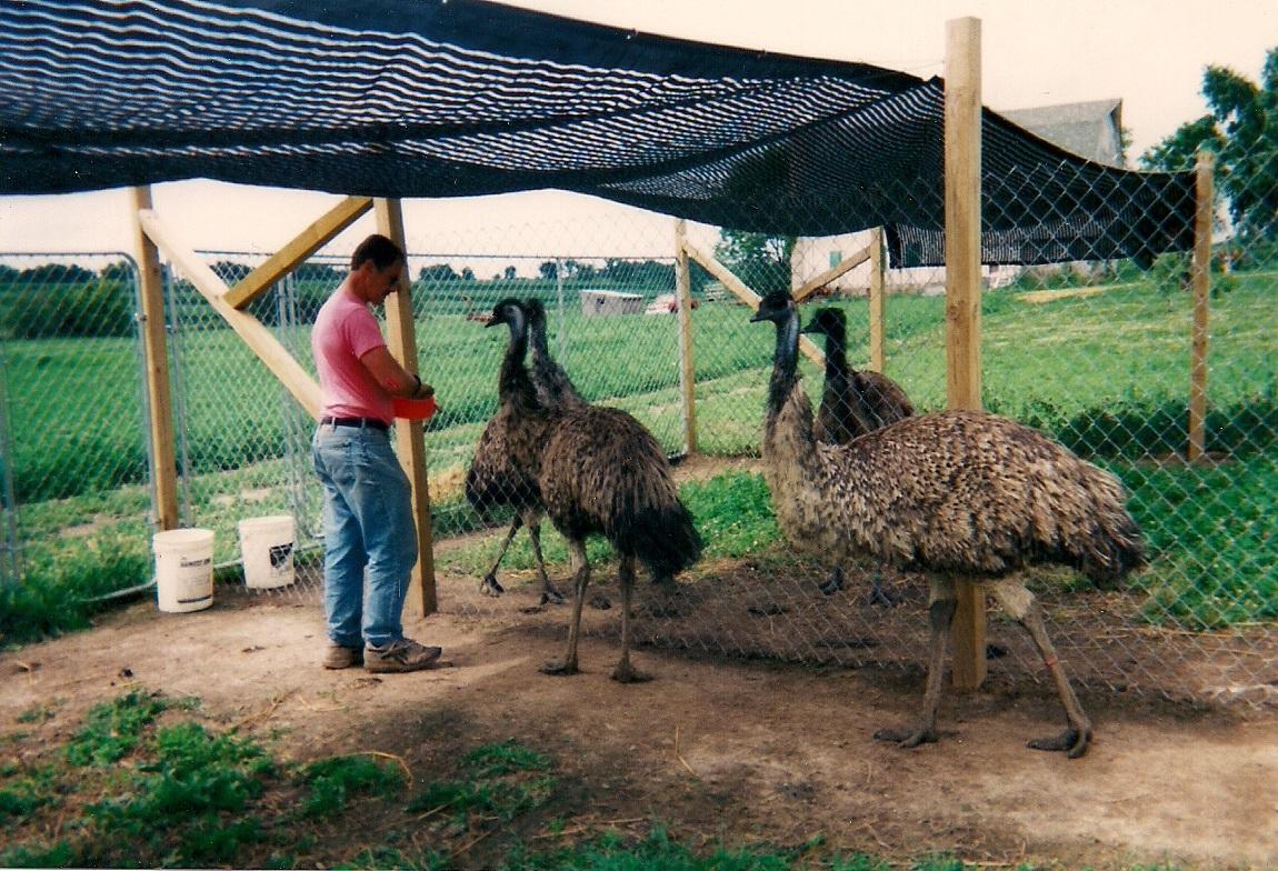 8f59456536 Sugar Maple Emu Farm